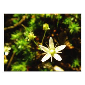 Fleur d'étoile photo d'art