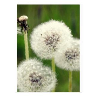 Fleur d'haleine 2013 1 cartes postales
