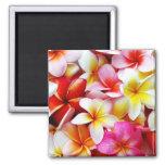 Fleur d'Hawaï de Frangipani de Plumeria customisée Magnets