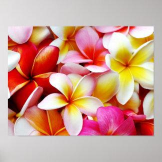 Fleur d'Hawaï de Frangipani de Plumeria customisée Poster