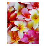 Fleur d'Hawaï de Frangipani de Plumeria customisée Posters