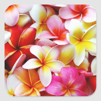 Fleur d'Hawaï de Frangipani de Plumeria customisée Sticker Carré