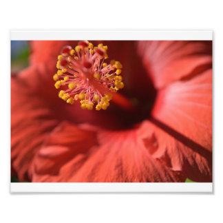 Fleur en fleur photographie d'art
