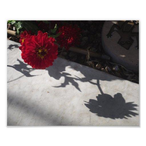 Fleur et ombre originales impression photo