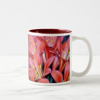 Fleur et origine de lis de Clivia Tasse 2 Couleurs