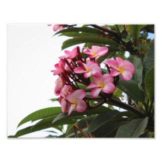fleur hawaïenne tirages photo