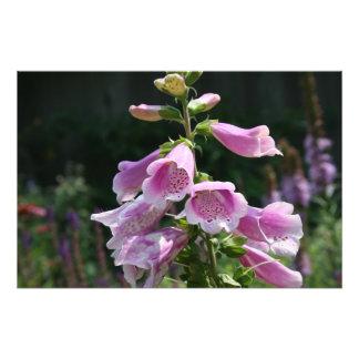 Fleur Impression Photographique