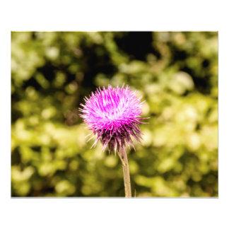 Fleur Impressions Photographiques