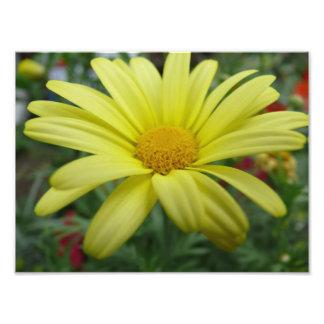 fleur jaune photographies