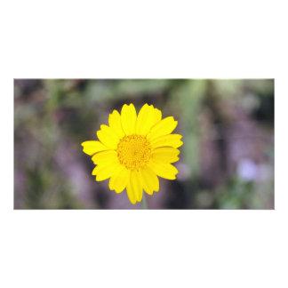 Fleur jaune photocartes personnalisées