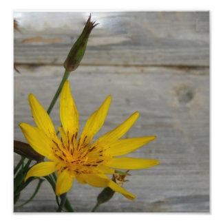 Fleur jaune d étoile art photographique