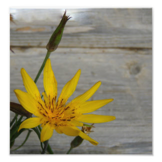 Fleur jaune d'étoile impressions photo