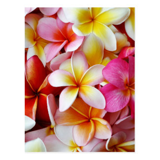 Fleur mélangée blanche jaune rose de Plumeria Carte Postale