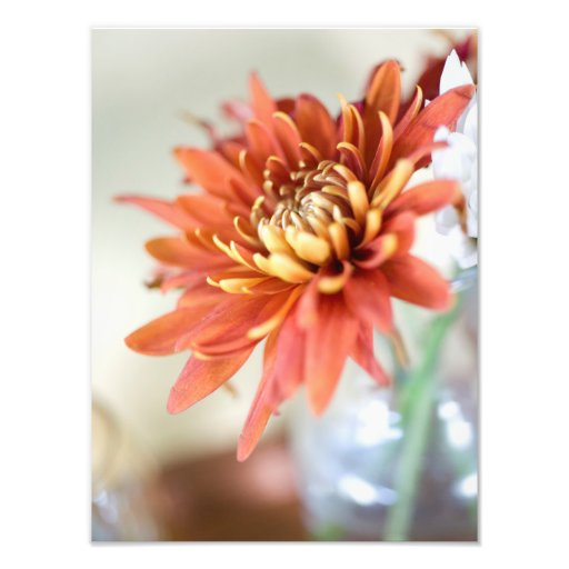 Fleur orange tirages photo