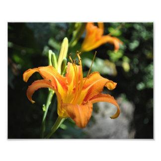 Fleur orange photo d'art