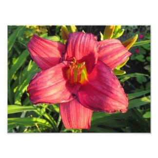 Fleur orientale rouge d'hémérocalle pendant l'heur  tirage photo