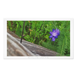 """""""Fleur parmi le bois,"""" décor floral Photographies"""