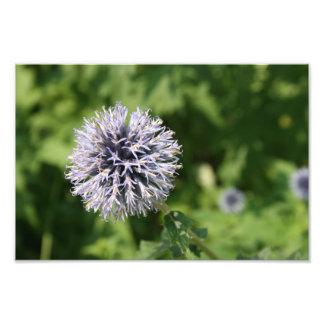 fleur pourpre tirage photo