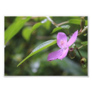 Fleur pourpre impression photo