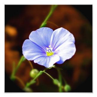 Fleur pourpre photographie