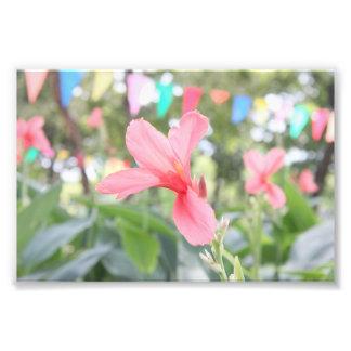 Fleur rosâtre  tirage photo