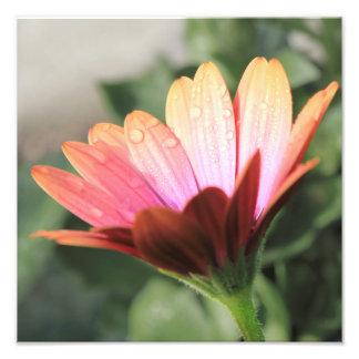 Fleur rose photographies