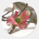 Fleur rose de cornouiller sticker rond