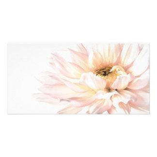 Fleur rose de dahlia - les dahlias ont customisé photocartes