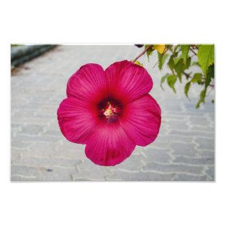 Fleur rose de Habbicus Photographes