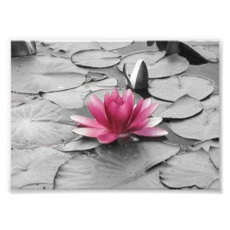 Fleur rose de protection de lis photos d'art