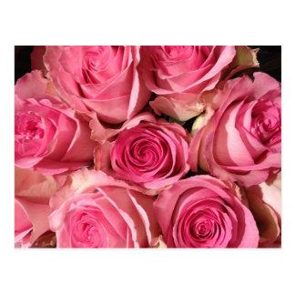 Fleur rose de roses carte postale