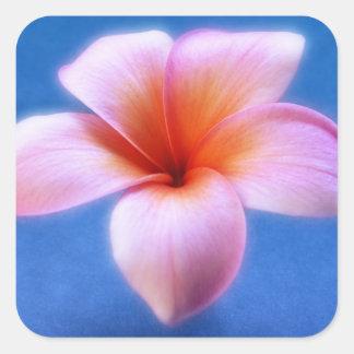 Fleur rose et bleue d'Hawaï de Frangipani de Sticker Carré