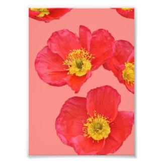 fleur rouge photo d'art