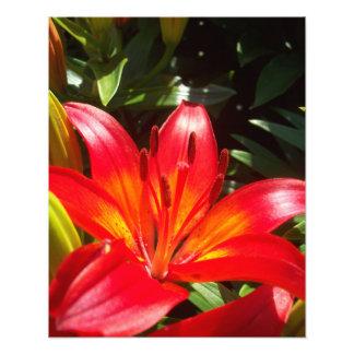 Fleur rouge impression photo