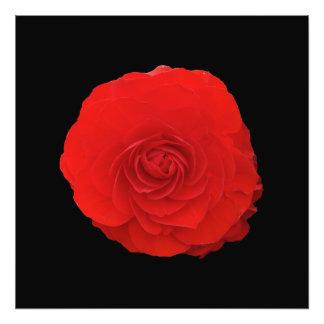Fleur rouge-foncé impression photo
