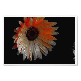 fleur rougeoyante photos sur toile