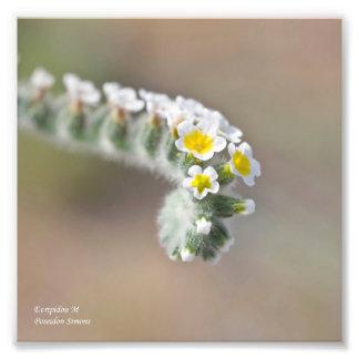 Fleur sauvage de la Chypre Photos D'art