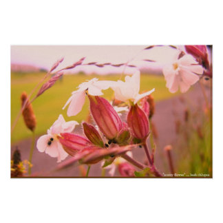fleur scotty poster