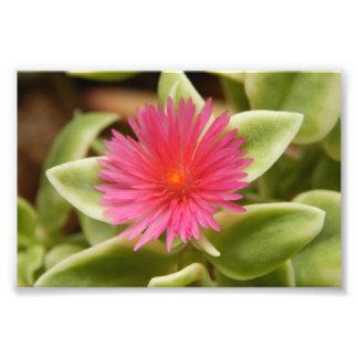 Fleur succulente variée impression photo