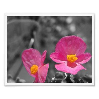 Fleur V - Rose sur le gris Photos