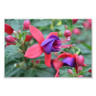 Fleur vibrante art photographique