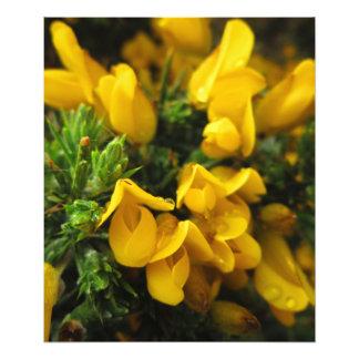 Fleurs à feuillage persistant jaunes photographie d'art