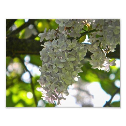 Fleurs Photographies