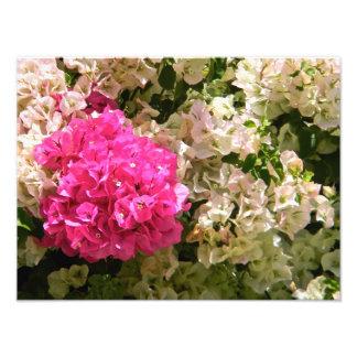 Fleurs Photos