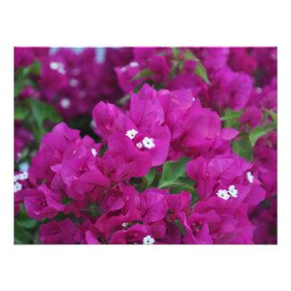 fleurs photographie