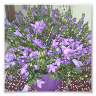 fleurs photos d'art