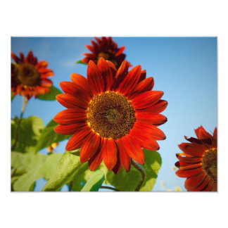Fleurs au soleil photos