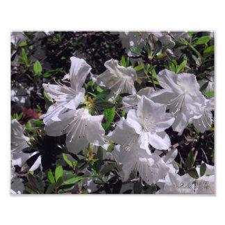 Fleurs blanches impressions photographiques
