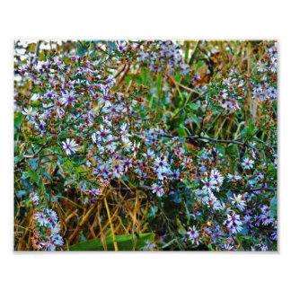 Fleurs blanches photo