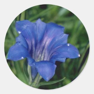 Fleurs bleues de gentiane sticker rond